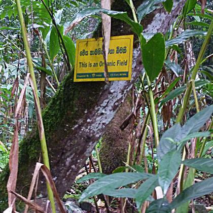 Biogewuerze Organic Field